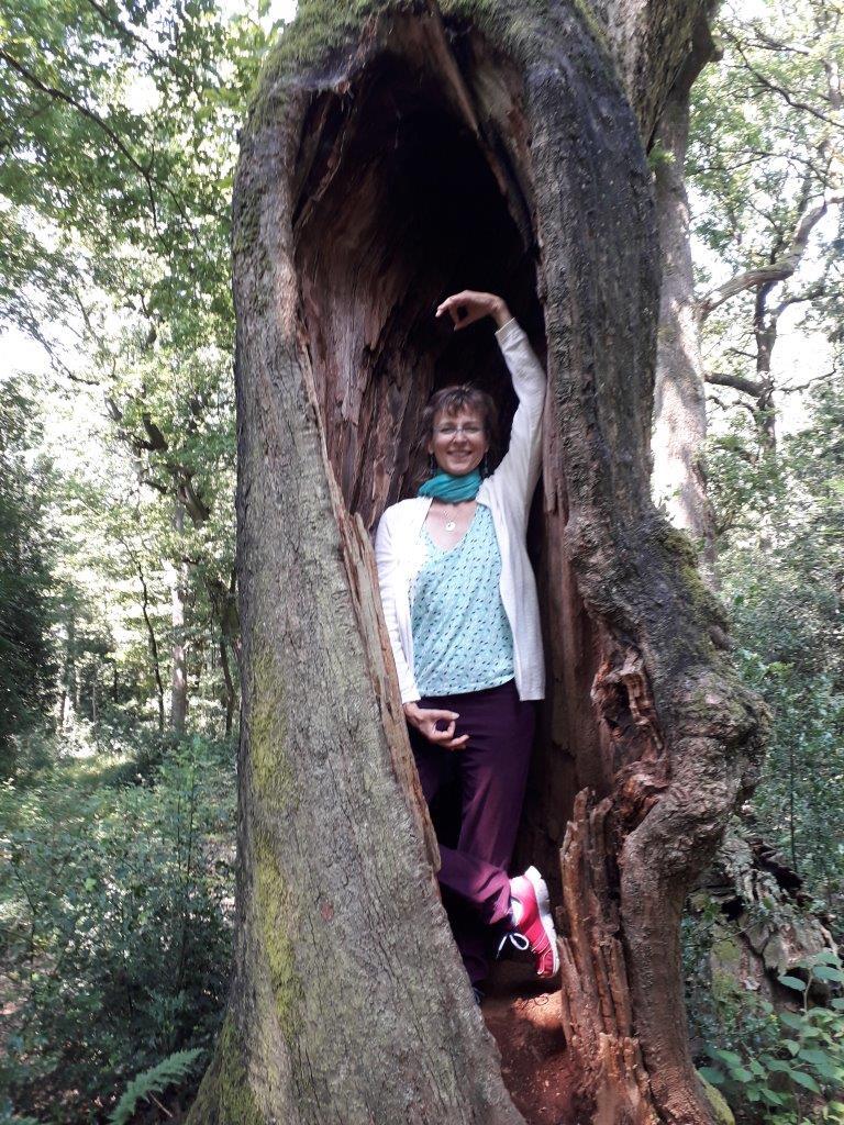 L'arbre dans un vieux chêne