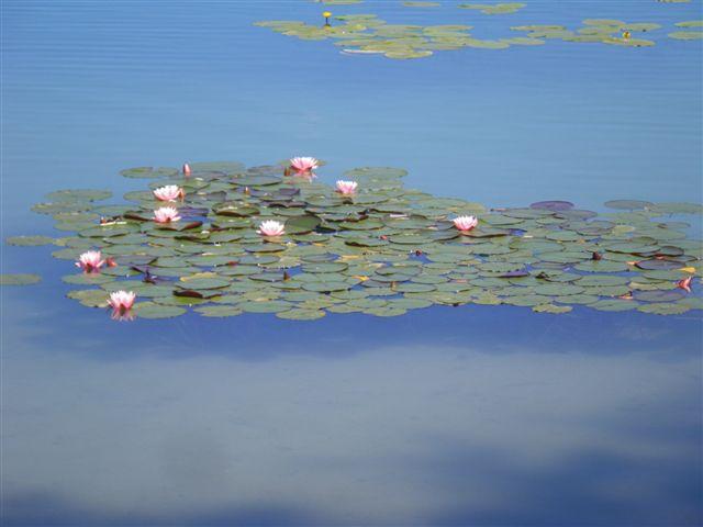 Souvenir d'un lac du Jura 7-2010